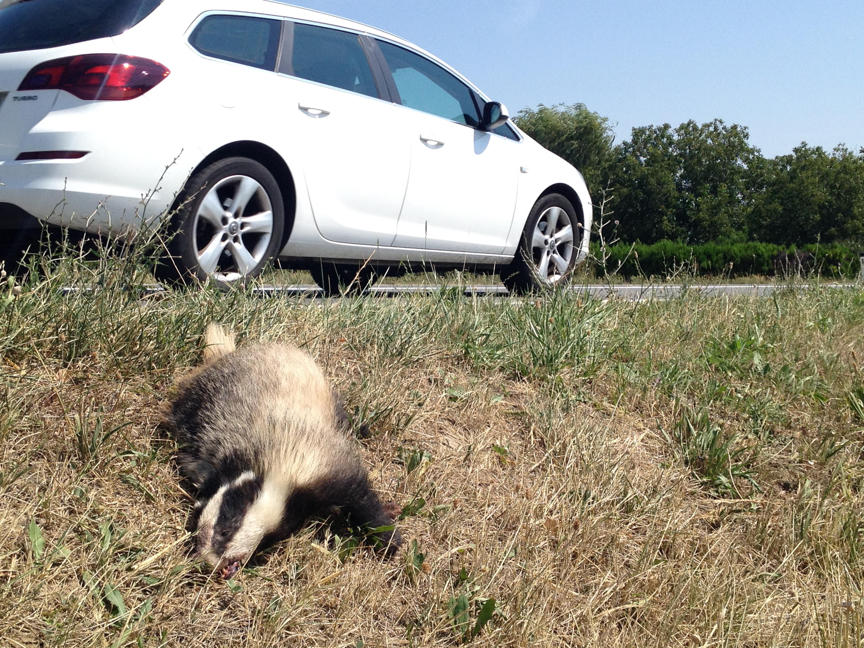 Watch Roadkill (2011) Online Free Putlocker